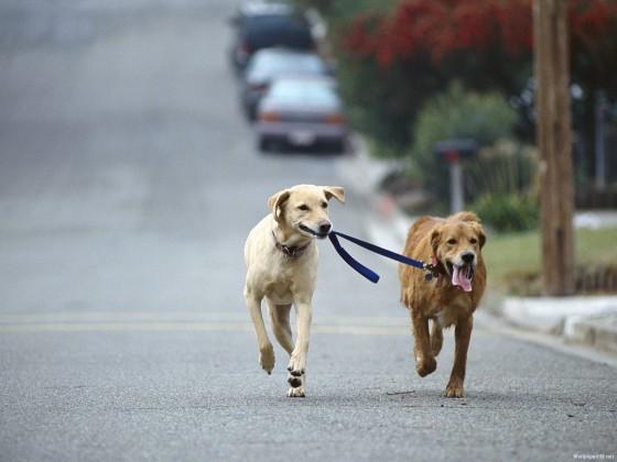 Correr con perros: entrevista al Veterinario Baltasar Nuozzi