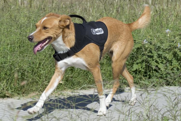 Mochila canina NO AFLOJES LOCOS POR CORRER