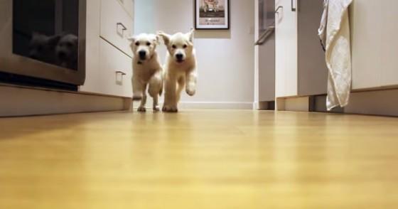 Video: secuencia de dos perros corriendo por su comida a medida que crecen