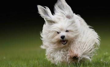 Correr con perros (parte 2): entrevista al Veterinario Baltasar Nuozzi
