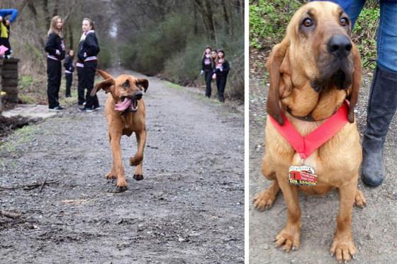 Una perrita escapa de su casa y corre media maratón en 1 hora 32 minutos