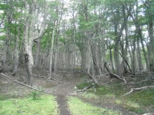 El bosque después del kilómetro 30