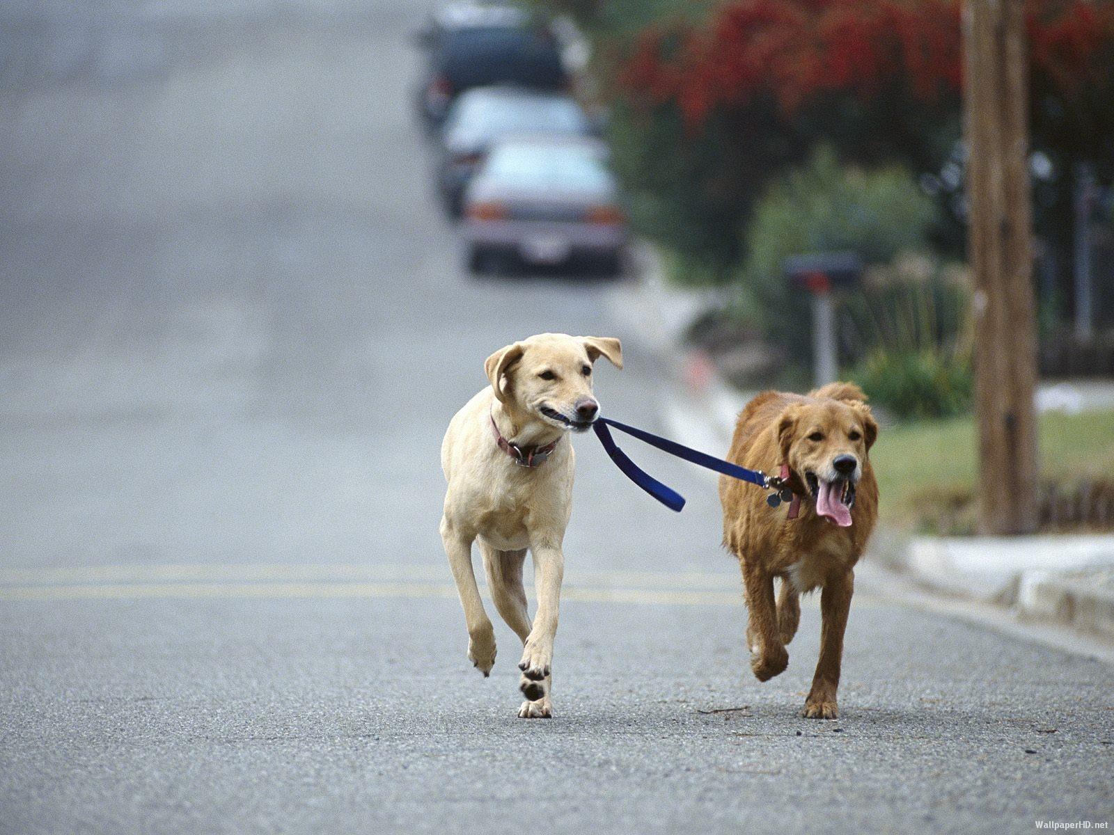 Correr con perros recomendaciones baltasar Nuozzi veterinario locos por correr 01